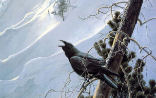 Птица ворон в славянской мифологии. Значение символа